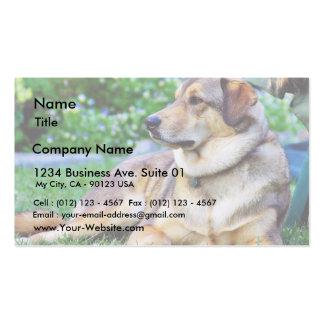 Bon chien carte de visite standard