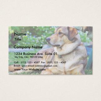 Bon chien cartes de visite