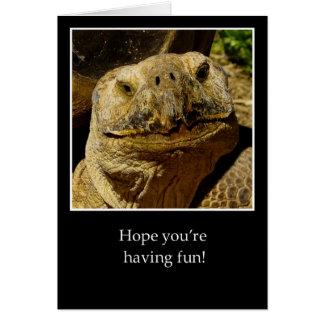 Bonjour à la tortue de sourire de campeur carte de vœux