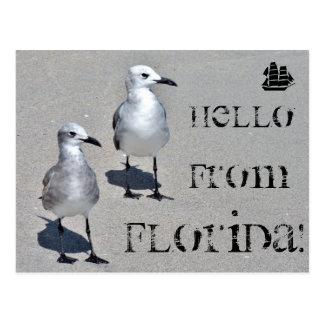 Bonjour de la Floride ! Mouette de Miami Carte Postale