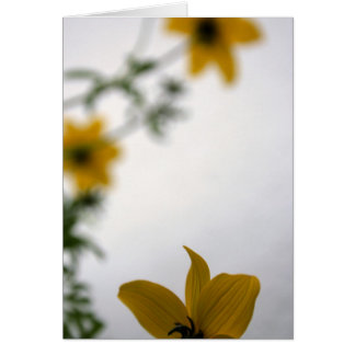 Bonjour en jaune - cartes florales de photographie