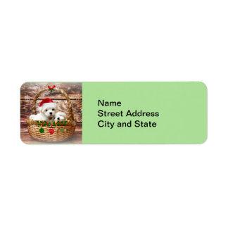 Bonnes fêtes : Chiots maltais Étiquette D'adresse Retour