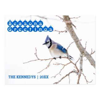 Bonnes Fêtes - geai bleu alimentant dans la neige Carte Postale