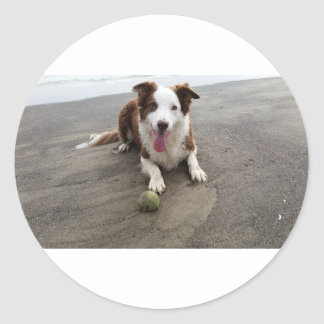 Border collie à la plage sticker rond