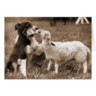 Border collie et carte de Lamb~Photo