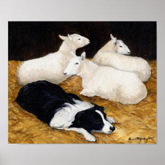 Border collie et copie d'art de chien de moutons posters