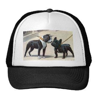 Boston Terrier et bouledogue français Casquette De Camionneur