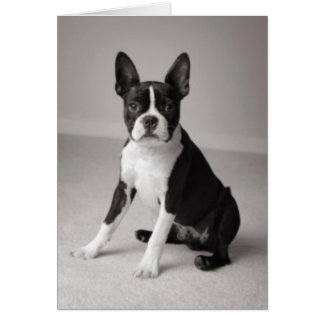Boston Terrier reposant la carte de note