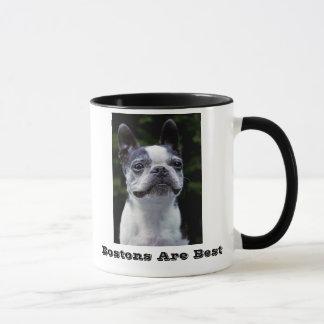 Bostons sont la meilleure tasse de Boston Terrier