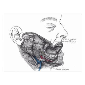 bouche d'anatomie carte postale