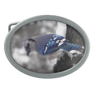 Boucle de ceinture de geai bleu