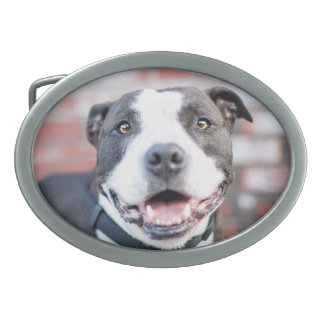 Boucle de ceinture ovale de Terrier de pitbull