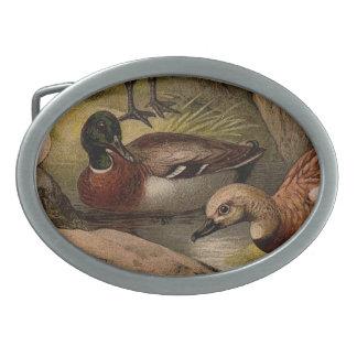 Boucle De Ceinture Ovale Peinture vintage colorée des canards