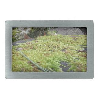 Boucle De Ceinture Rectangulaire La mousse verte dans le détail de nature de la