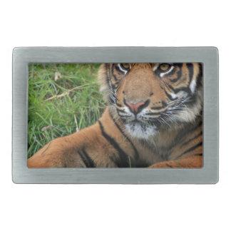 Boucle De Ceinture Rectangulaire Portrait de CUB de tigre