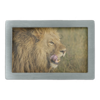 Boucle De Ceinture Rectangulaire Portrait de mâle de lion léchant sa bouche