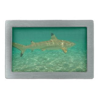 Boucle De Ceinture Rectangulaire Shark in bora bora