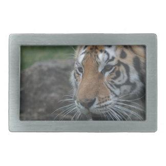Boucle De Ceinture Rectangulaire tigre