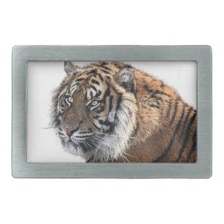 Boucle De Ceinture Rectangulaire Tigre majestueux orange frais avec le regard fixe