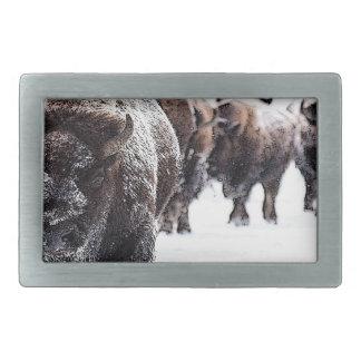 Boucles De Ceinture Rectangulaires Buffalo