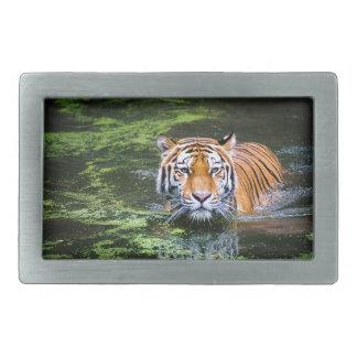 Boucles De Ceinture Rectangulaires Natation de tigre