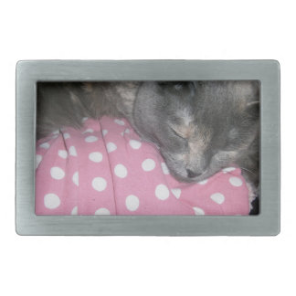 Boucles De Ceinture Rectangulaires Produits de chat