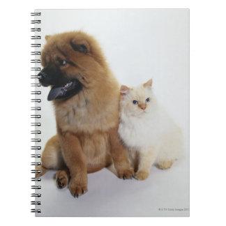 Bouffe de bouffe et un chat blanc se reposant carnet