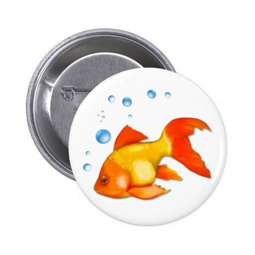 Bouillonne le poisson rouge badge zazzle for Acheter poisson rouge lyon