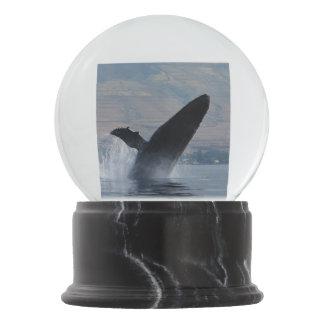 Boule À Neige violation de baleine de bosse