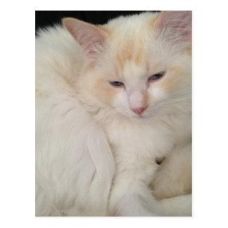 Boule de carte postale rouge de chat de Ragdoll de