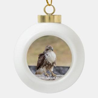 Boule En Céramique Portrait d'un faucon coupé la queue par rouge non