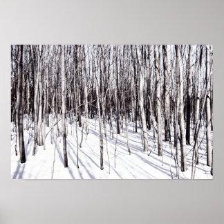 Bouleau d'hiver, nature de branches de forêt de poster