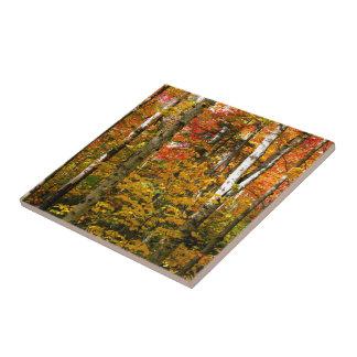 Bouleaux d'automne petit carreau carré