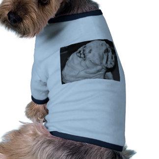 Bouledogue anglais tee-shirt pour animal domestique