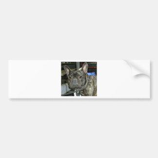 Autocollants stickers de bouledogue fran ais for Autocollant mural francais