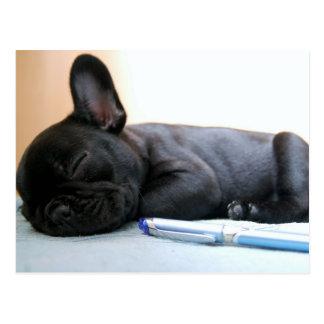 bouledogue français puppy.png carte postale