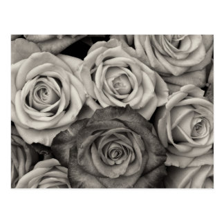 Bouquet assez noir et blanc de roses des fleurs cartes postales