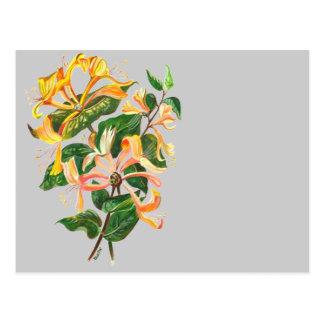 Bouquet de chèvrefeuille cartes postales