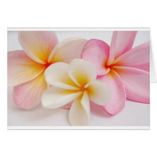 bouquet des frangipanis carte de vœux