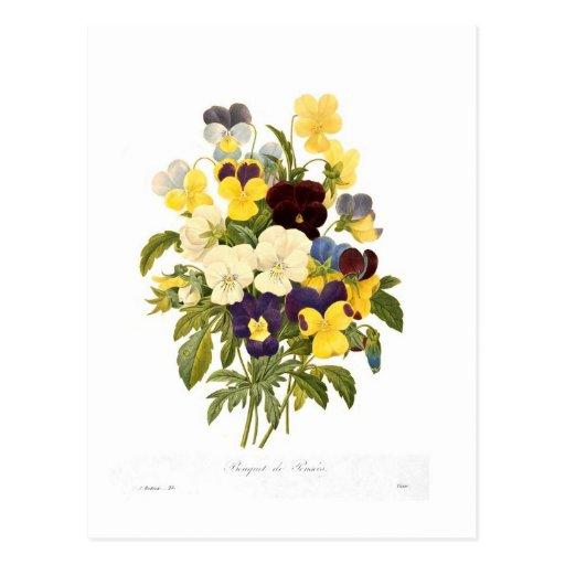 Bouquet des pensées par Pierre-Joseph Redouté Carte Postale