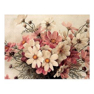 Bouquet vintage de cosmos carte postale