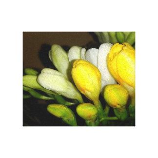 Bourgeon floraux blancs et jaunes de freesia toile
