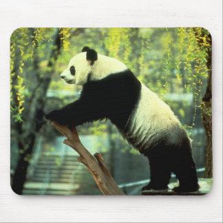Bout droit de yoga de panda géant tapis de souris