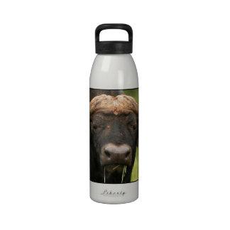Bouteille d'eau de Buffalo d'eau