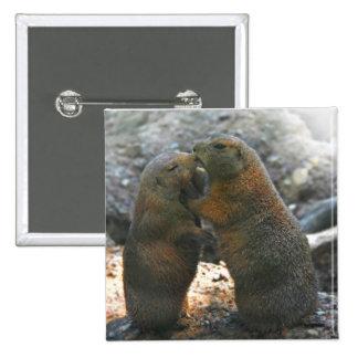 Bouton avec les couples mignons de marmotte badge avec épingle