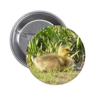 Bouton de Gosling d'oie du Canada de bébé Badge