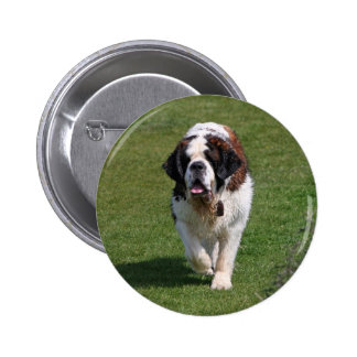 Bouton de photo de chien de St Bernard beau, goupi Badge Avec Épingle