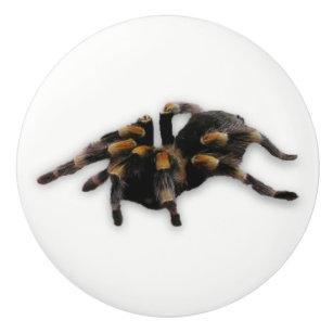 Scarabée insecte tiroir bouton armoire poignée de porte TRACTION étain Gold