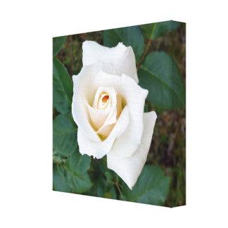 bouton de rose blanc toile
