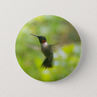 Bouton rouge masculin de colibri de gorge badge